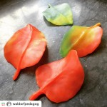 Beautiful autumn leaves made from modeling beeswax! Photo by Waldorfhellip